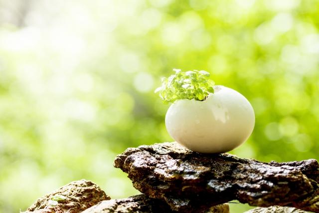 超能力者になる方法は松果体を活性化させる事?
