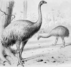 絶滅した鳥ジャイアントモアの真実inニュージーランド!