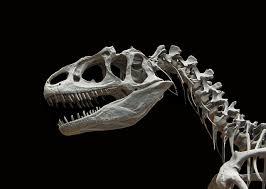恐竜絶滅の理由は隕石ではない?2017最新調査結果!!