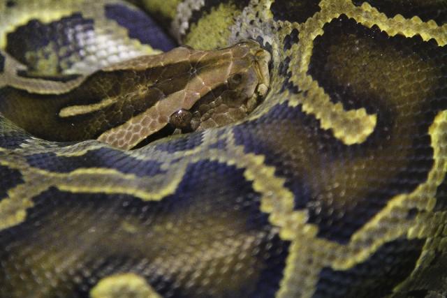 蛇の夢の夢占い〜噛まれるのは恋愛面での変化の兆し?〜