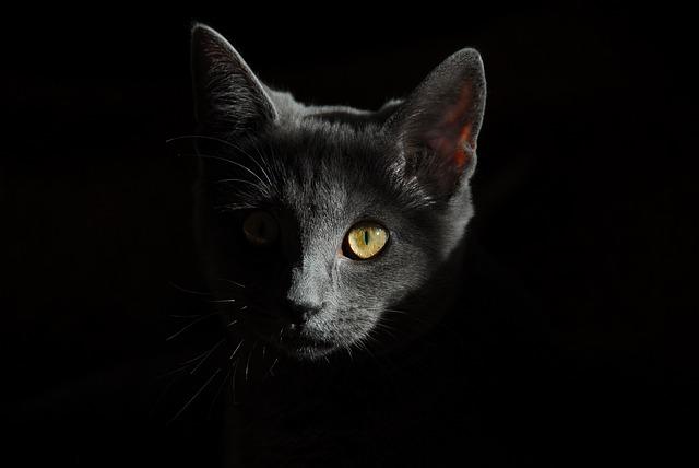 シュレディンガーの猫理論とは?誰でも分かる簡単解説!